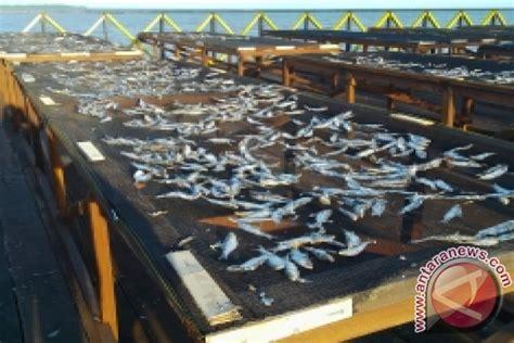 Tempat Pemanggang Ikan pembangunan tempat penjemuran ikan di penajam rung antara news kalimantan timur antara