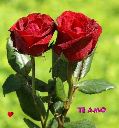 imagenes de rosas las mas hermosas las rosas m 225 s hermosas imagui
