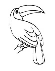 toucan coloring page free coloring pages of a toucan
