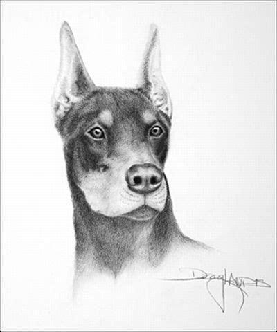 imagenes a lapiz de animales dibujos de animales a l 225 piz dibujos a lapiz