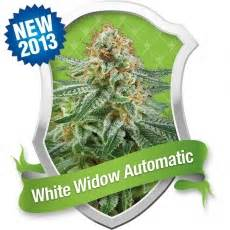 lade per cannabis white widow automatic royal seeds