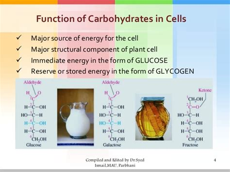 carbohydrates function in cell carbohydrates