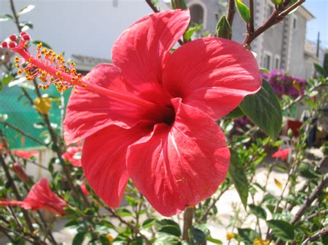 Beautiful Flower Pictures by File Flor Roja Rafax Jpg Wikimedia Commons