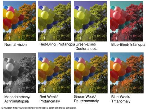 color blindness simulator visual impairments