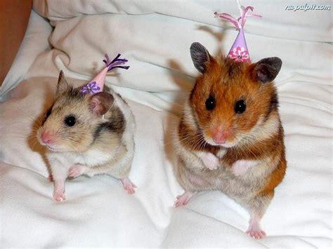 new year animal birthday chomiki dwa imprezowe na pulpit