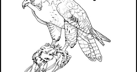 hawk coloring pages hawk coloring pages minister coloring