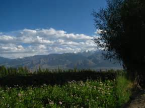 file india ladakh leh 053 flower fields outside my