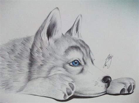 imagenes para dibujar a lapiz de lobos las 25 mejores ideas sobre dibujos de animales en