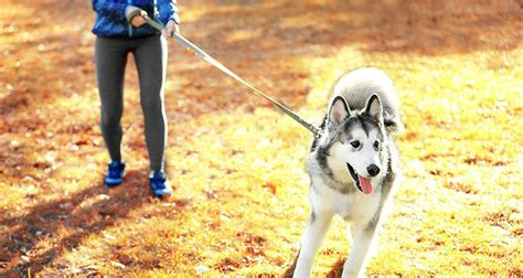 out on a leash how terryã s gave me new books problems walking your cesar s way