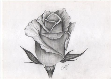rose bud tattoo design of bud