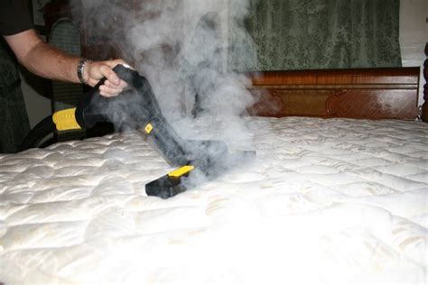 steaming bed bugs cleaning business