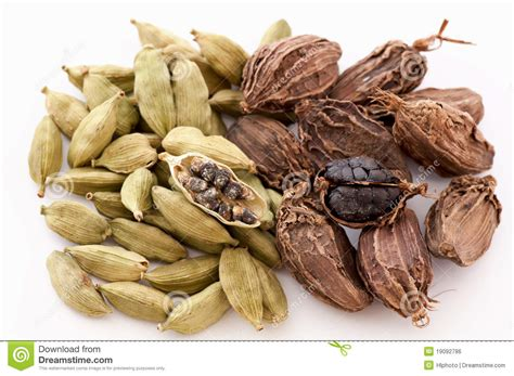 Cardamom Based Home Remedies by Green And Black Cardamom Royalty Free Stock Image Image