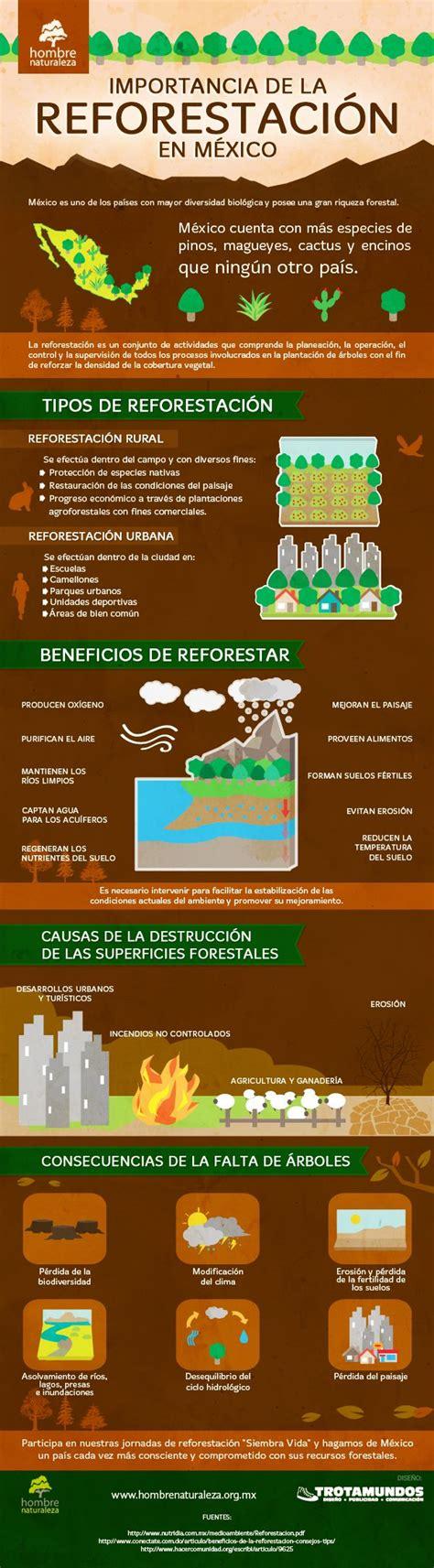 infografia reforestacion cosas  escuela