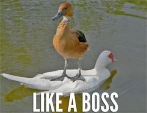 Like A Boss Meme - like a boss meme