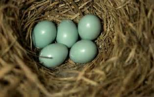 what color are blue eggs birds unlimited how birds color their eggs naturally