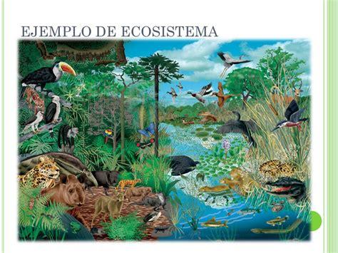 cadenas alimenticias ejemplos yahoo ejemplo de un ecosistema tema 3 los ecosistemas y cadenas