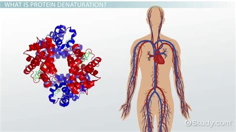 protein biology definition denaturation of protein definition causes