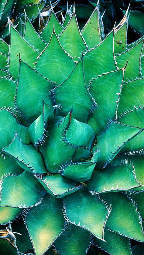 wallpaper iphone cactus iphone 5s wallpaper