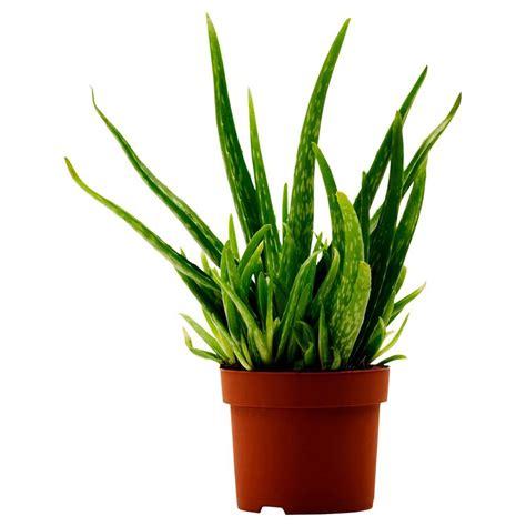 acquisto fiori on line piante on line fiorista vednita piante on line