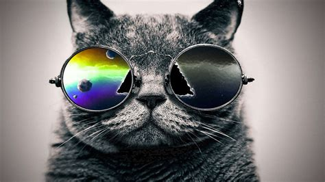 wallpaper hipster cat free hipster cat pictures at wildlife 187 monodomo