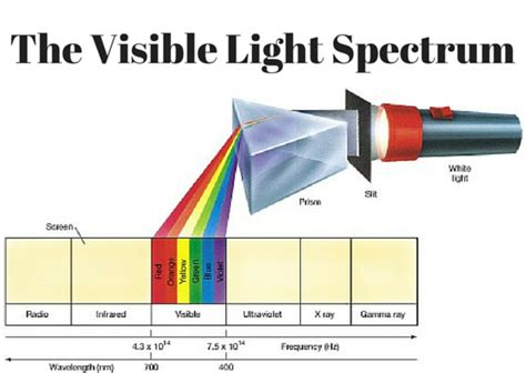 Visible Spectrum Of Light by The Visible Light Spectrum 1000bulbs