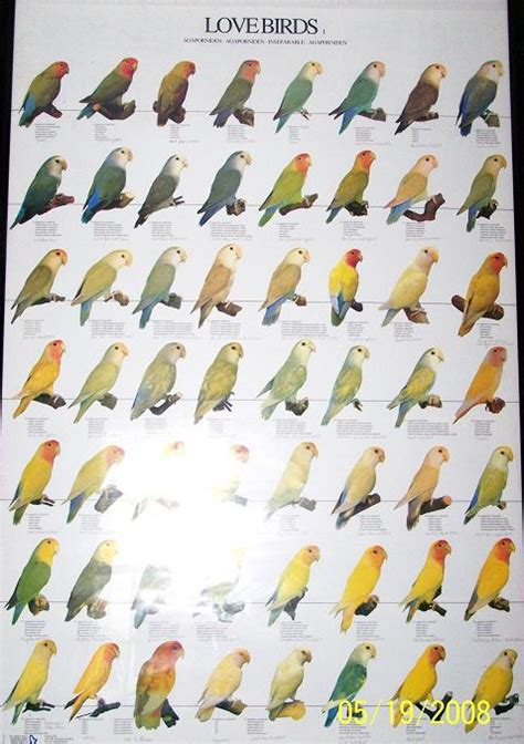 flying gems aviary breeding lovebirds