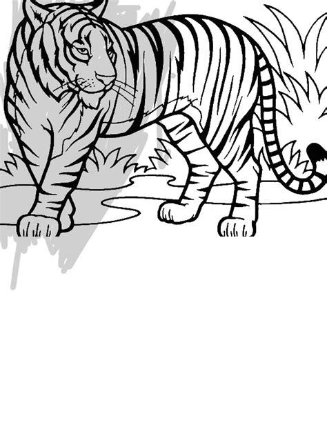 illustration  sumatran tiger  conservation coloring