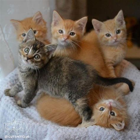 Baby Cat best 25 baby kittens ideas on baby cats