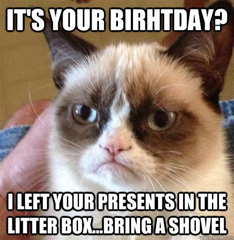 Cat Meme Birthday - happy birthday angry cat memes quickmeme