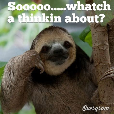 Funny Sloth Pictures Meme - pics for gt clean funny sloth memes