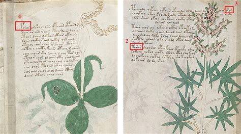 Pdf Mystery Finding World Broken by Voynich Manuscript Most Mysterious Text In World May