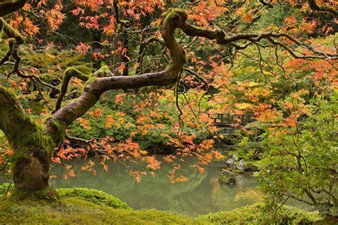 fotobehang landschap canvas printen amp posters japanse