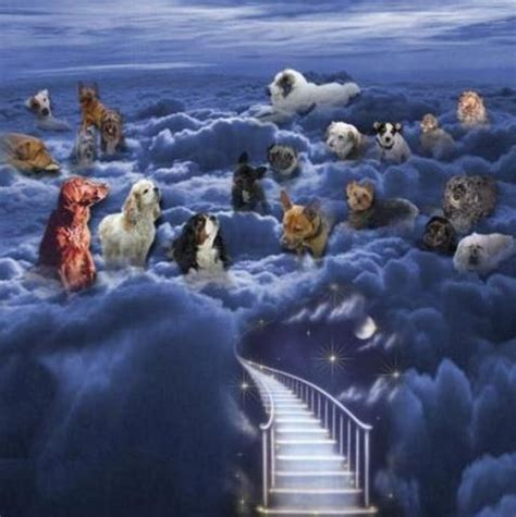 better is one day in your house waiting at the rainbow bridge better is one day in your house pi