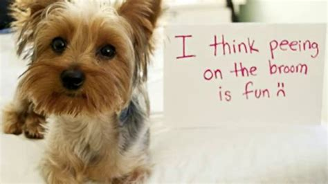 dogs with dogs with signs 14 background funnypicture org