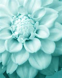 turquoise flowers turquoise flower flowers