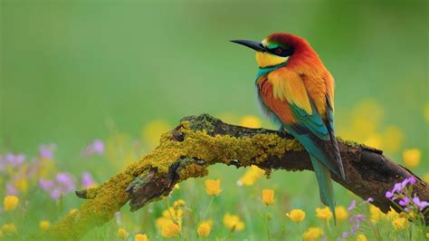 birds wallpaper flowers for flower lovers flowers and birds desktop