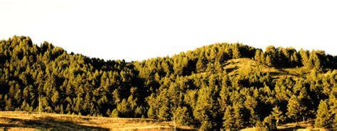sedute di laurea ingegneria unical dipartimento di ingegneria per l ambiente e il territorio