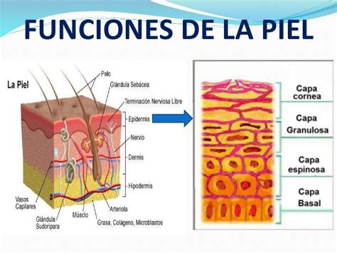 libro la piel de la cuidado de la piel del prematuro