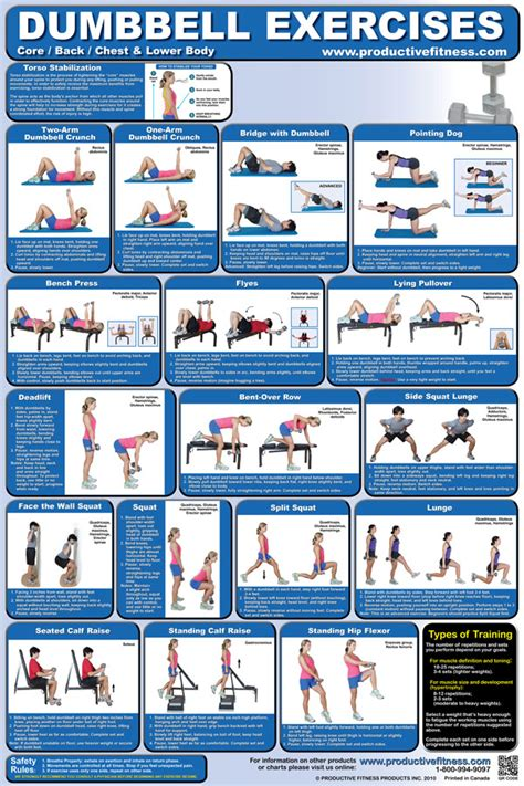 weight bench exercises chart dumbbell exercises chart lower body core chest back