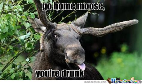 Moose Meme - go home moose by recyclebin meme center