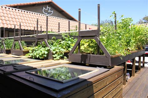 backyard aquaponics grow 10x more fruits and vegetables
