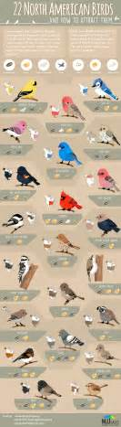 22 american birds and how to attract them infographic