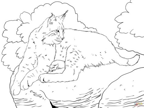 bobcat coloring page bobcat laying down coloring page free printable coloring