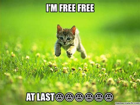 Free Memes - i m free free