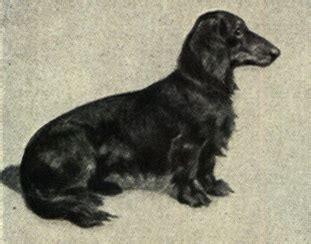 pet simple english wikipedia   encyclopedia