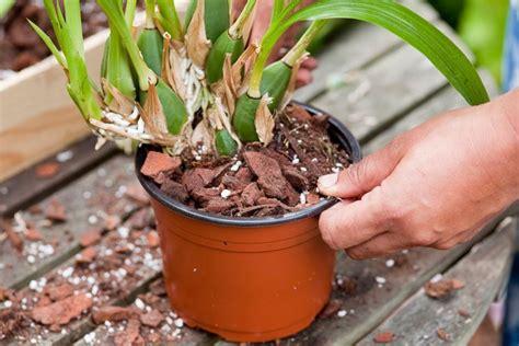 vasi orchidee vasi per orchidee vasi per piante tipologie di vaso