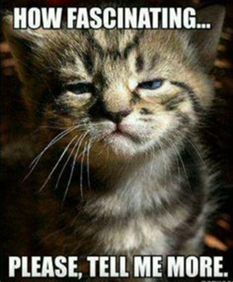 Sarcastic Cat Meme - 1000 images about sarcastic sayings on pinterest work