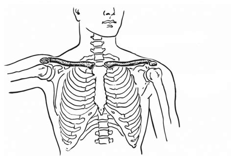 anatomy coloring pages coloring pages to print