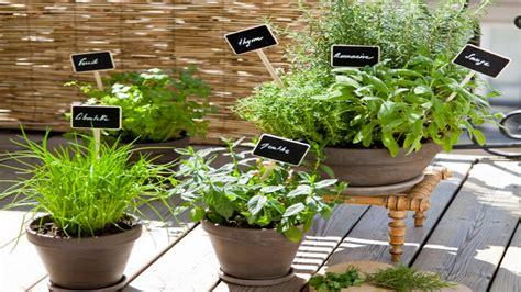 Plantation Herbes Aromatiques Jardiniere by Jardini 232 Re Sos Plantes Aromatiques Pour La Cuisine D 233 Co Cool