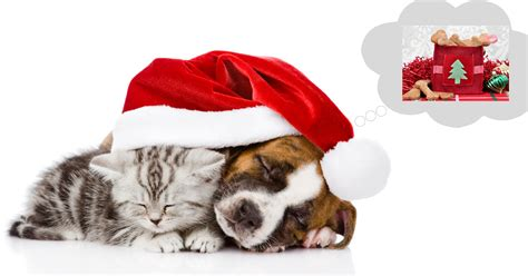 top pet gifts 4 of the best pet christmas gifts petstayadvisor
